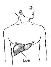 Liver Location