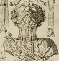 Casseri engraving of the neck