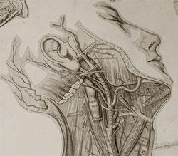 Grey's Anatomy Illustration, 1858