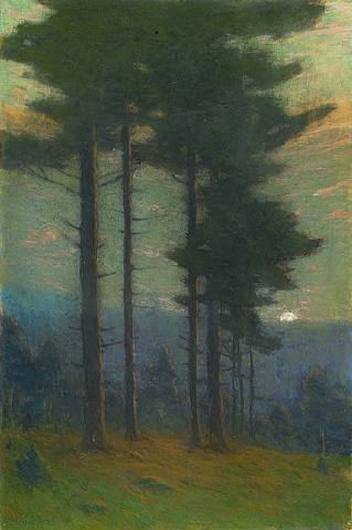 White pines in a twilight sky.