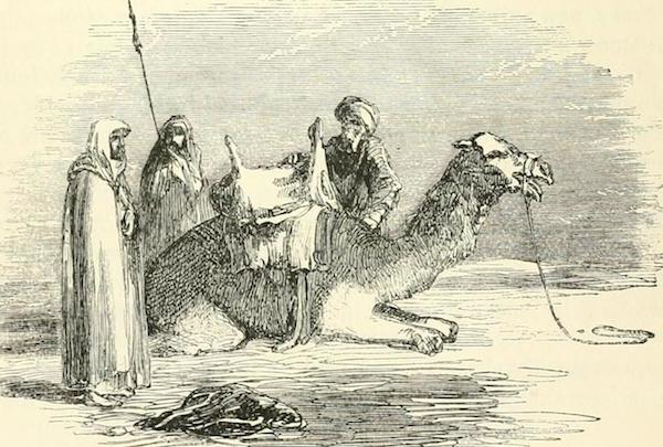 A Turkish saddle, high in the front and back, just like our friendly pituitary cradle. Illustration by Sir Henry Austen Layard: Nineveh and Babylon, 1882.